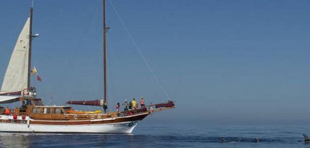Navegación y Cetáceos