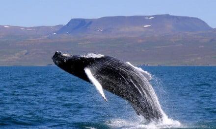 Lofoten, Tromso y Ballenas